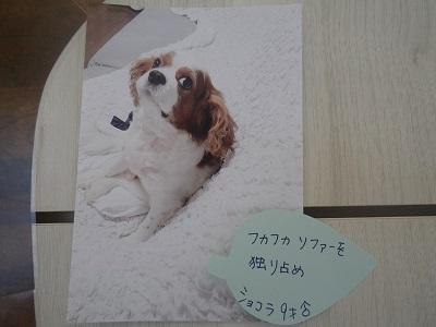 愛宕ショコラ2019