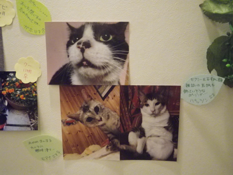 太田家猫1