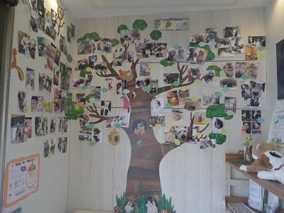 PePeの木終わり2019-1