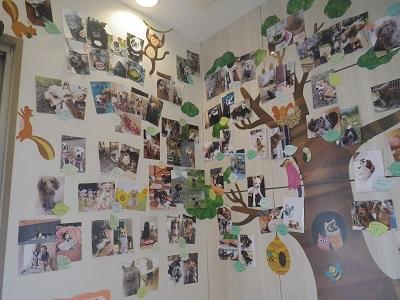 PePeの木終わり2019-2