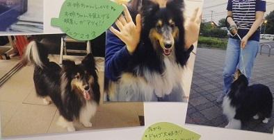 澤田アルグ2