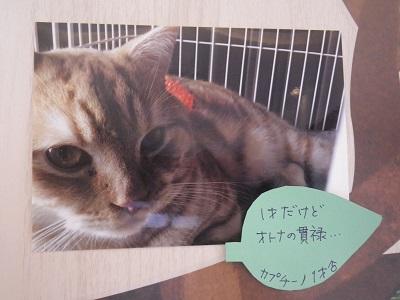 鈴木カプチーノ2019