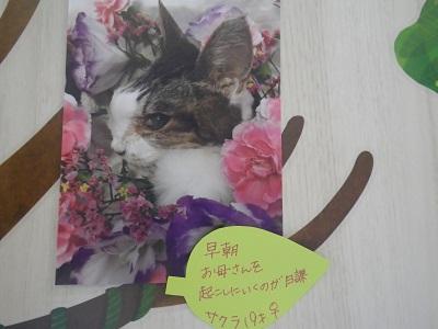 高橋サクラ2019
