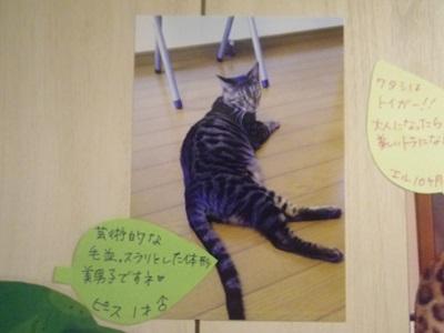 矢菅ピース2020